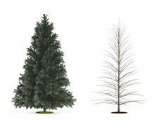 Alpine fir tree. Stock Illustration