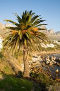 Stock Photo of palm tree on the beach