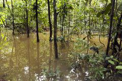 flooded rainforest in the ecuadorian amazon - stock photo