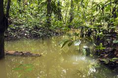 Flooded pool in rainforest in the ecuadorian amazon Stock Photos