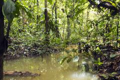 flooded pool in rainforest in the ecuadorian amazon - stock photo