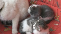 Playful kittens and curious Stock Footage