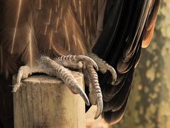 Talon of a vulture close up Stock Photos