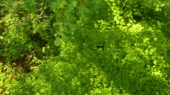 tree canopy above trees - stock footage