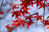 Colorful autumn leaves background Stock Photos