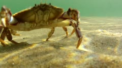 Ocean Crab on the Sea Floor Stock Footage