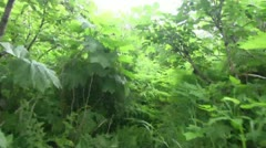 jungle ,forest - stock footage