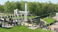Fountains with golden Samson statue in Peterhof, Russia. Stock Footage