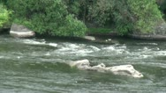 Rapid water of the mountain river Stock Footage