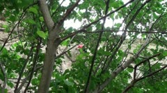 Cliffhanger through the trees Stock Footage