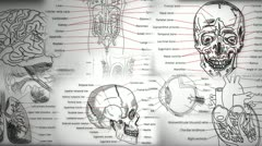 Human Body Parts Stock Footage