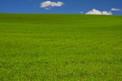 field of green grass - stock photo