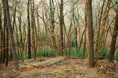 winter temperate forest - stock photo