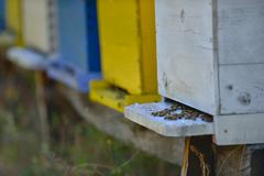 Honey bee home in nature Stock Photos