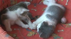 Playful and curious kittens Stock Footage