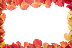 rectangle border of red and yellow leaves - stock photo