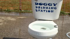 Doggy Drinking station Stock Footage