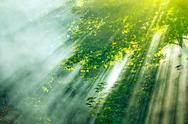 Stock Photo of sunlight mist forest