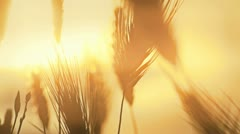 Stock Video Footage of grass sunset