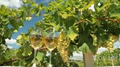 DOLLY: White Grape and Wine Stock Footage