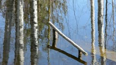 Early spring melt-water and tree reflections in pond Stock Footage