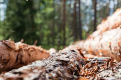 Pile of pinewood Stock Photos
