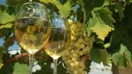 White Wine Glasses in Vineyard Stock Footage