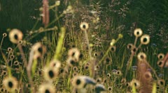 Spiderweb Grassy Wildflower Meadow pan focus Stock Footage