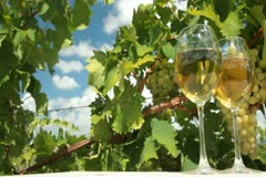 White Grapes and Wine - stock footage