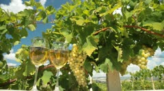 Muscat White Wine Glasses Stock Footage
