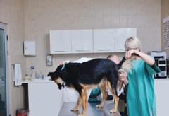 Stock Photo of veterinarian and assistant in a small animal clinic
