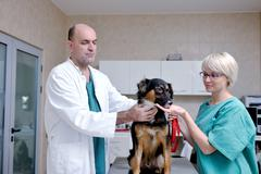 Veterinarian and assistant in a small animal clinic Stock Photos