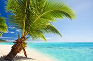 Small palm tree hanging over stunning lagoon Stock Photos