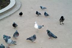 Stock Photo of Pigeons
