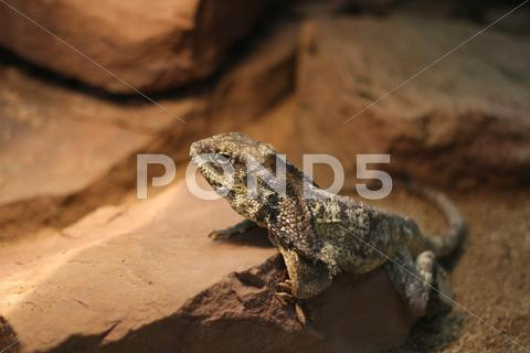 Stock photo of Lizzard