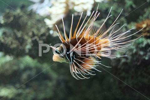 Stock photo of Fish.jpg