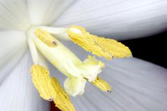 Stock Photo of White flower