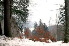 Forest in winter - stock photo
