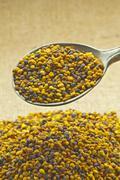 bee pollen - stock photo
