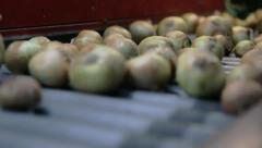 Selection of onion on vegetable base in the conveyor 3 Stock Footage