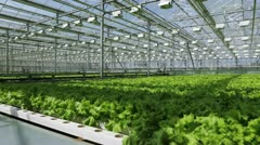 Growing herbs and vegetables in the greenhouse Stock Footage