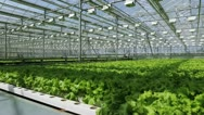 Stock Video Footage of Growing herbs and vegetables in the greenhouse