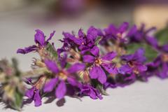 Stock Photo of flower macro