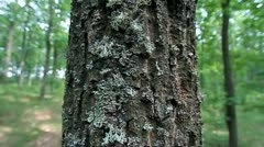 Tree trunk - stock footage