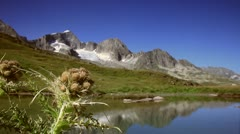 Mountainscape with alpine floral (cirsium spinosissimum) Stock Footage
