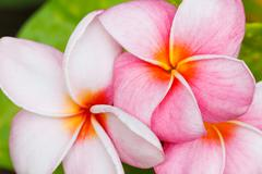 tropical flowers - stock photo
