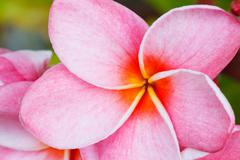tropical flower - stock photo