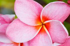 Tropical flower Stock Photos