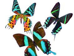 Tropical butterflys Stock Photos