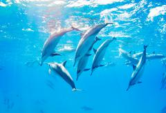 dolphins swimming underwater - stock photo